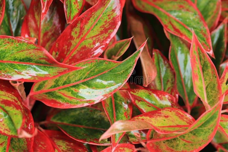 Efter regnträdgård färgrika sidor med vattendroppe för bruk som bakgrund arkivbild