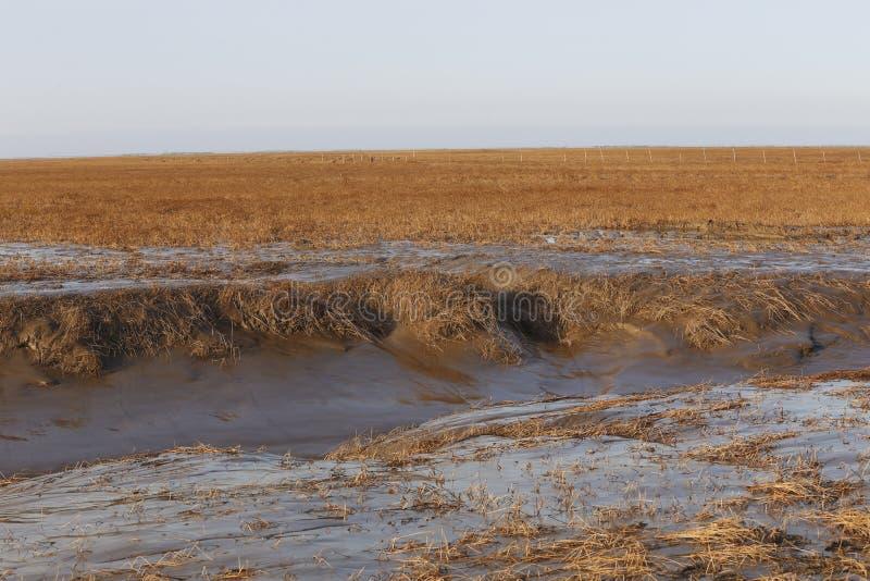 Efter sina, härligt landskap av den hangzhou fjärdvåtmarken i Kina arkivfoton
