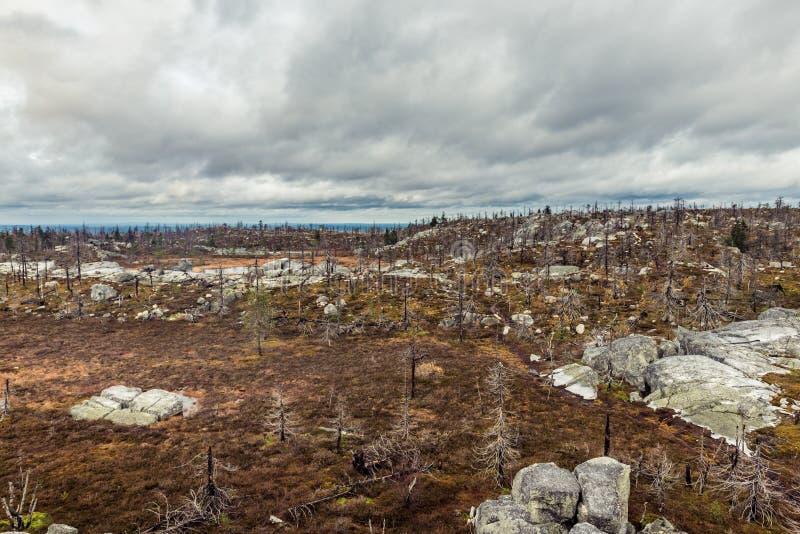 Efter skogsbrand royaltyfria foton