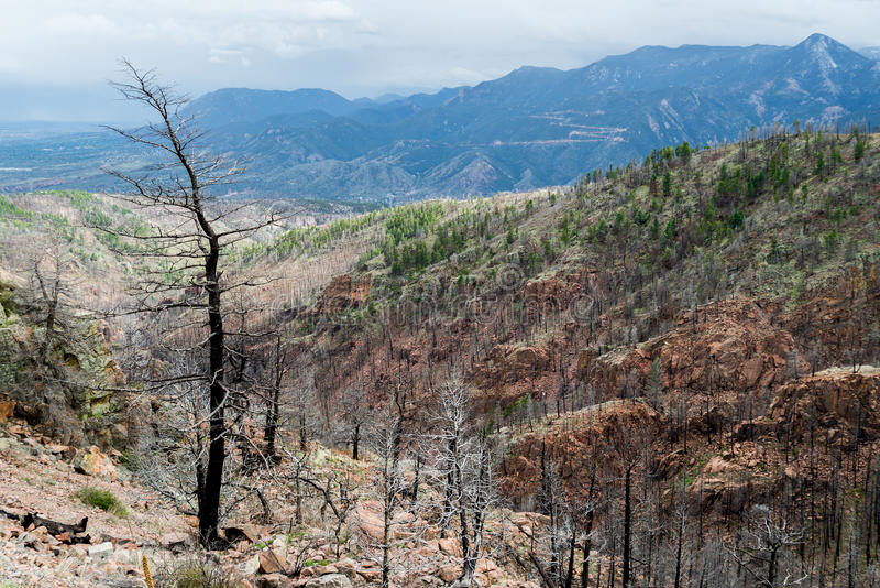 Efter Waldo Canyon Forest Fire i Colorado arkivfoto