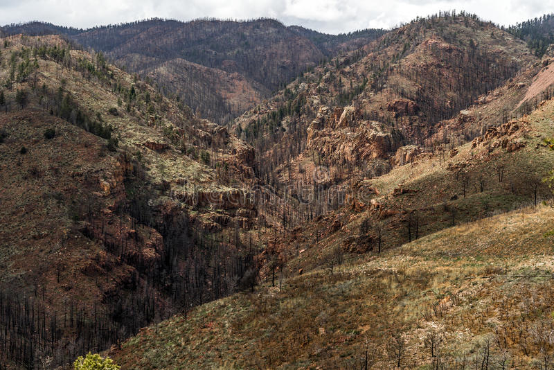 Efter Waldo Canyon Forest Fire i Colorado royaltyfria foton