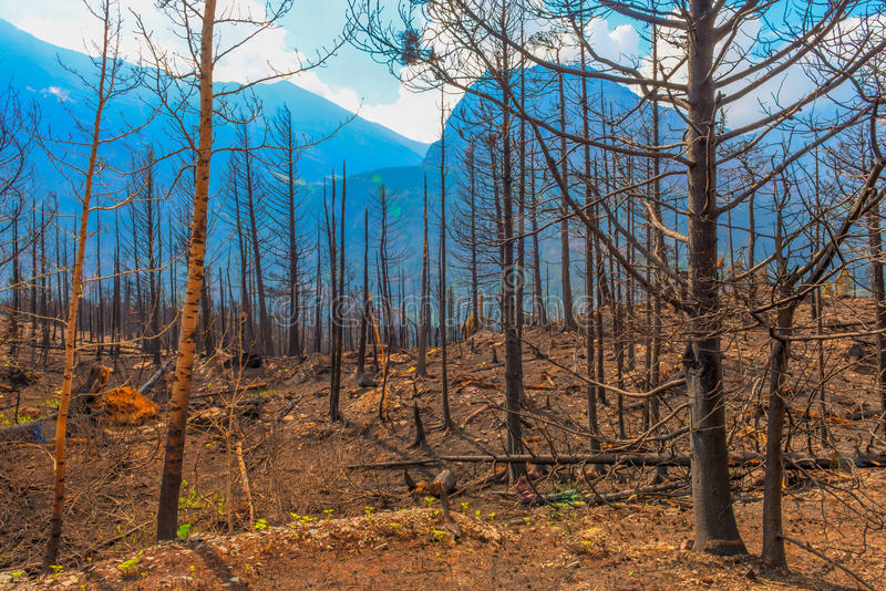 Efterdyning av den Reynolds Creek Wildland Forest Fire glaciärnationalparken 2015 arkivfoto