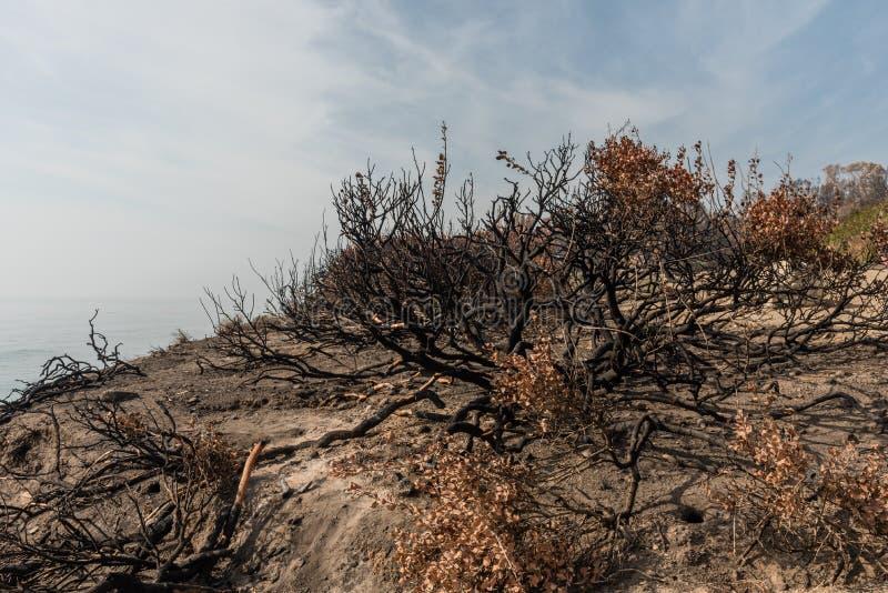 Efterdyning av den Woolsey branden på El-matador State Beach i Malibu arkivbilder