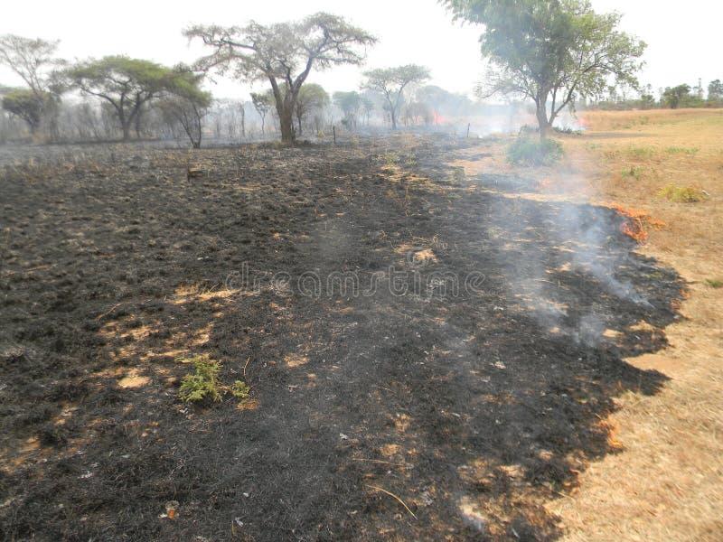 Efterdyning av skogen som förstörs av buskebrand royaltyfri foto