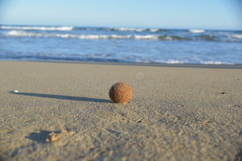 Egagropili, коричневый шарик помыло вверх приливами стоковое фото