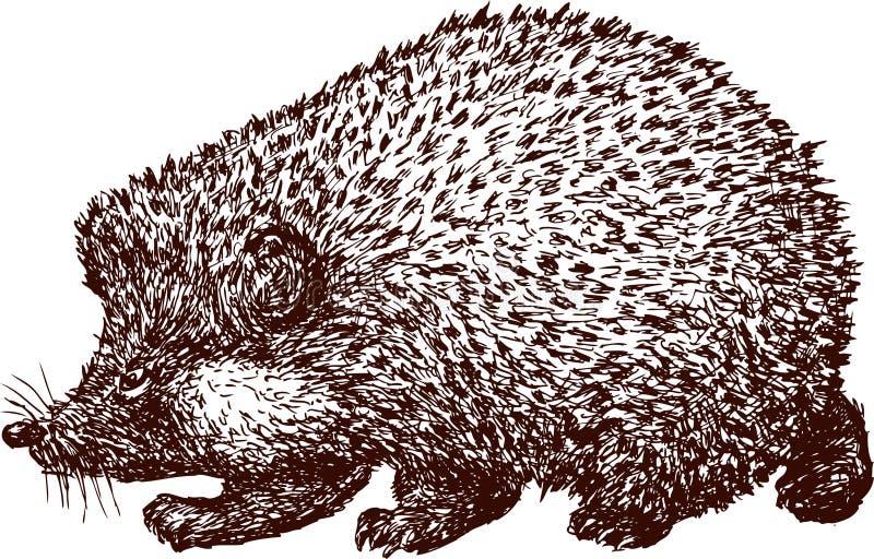 Egel stock illustratie