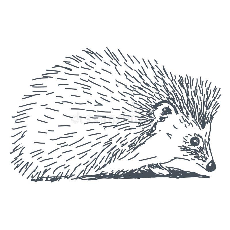 Egeltekening vector illustratie