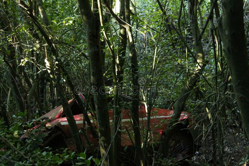 Egenskapen av skogen royaltyfri foto