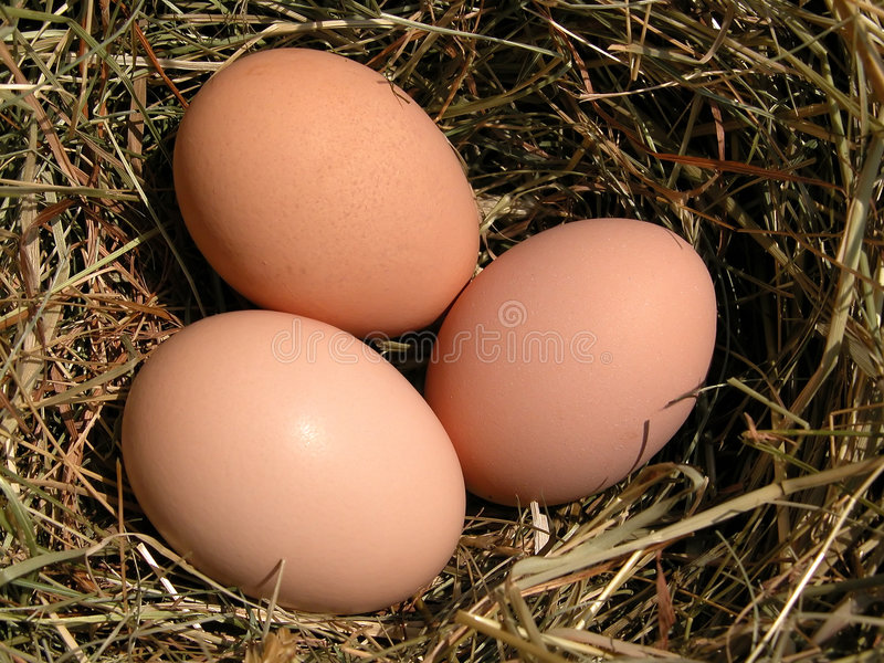 Download Egg stock image. Image of soft, hard, detail, bird, breakfast - 111831
