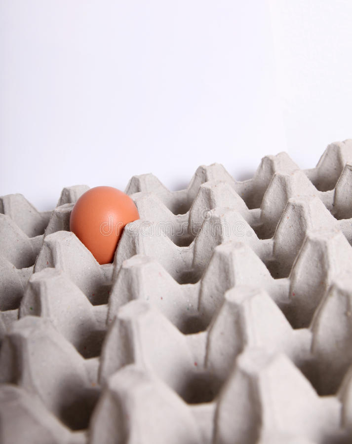 Egg. Close-up of a single egg in a packing stock images