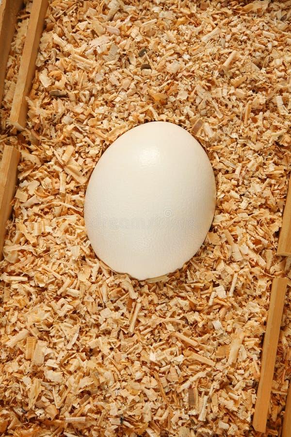Download Egg stock image. Image of white, safety, easter, transport - 12653639