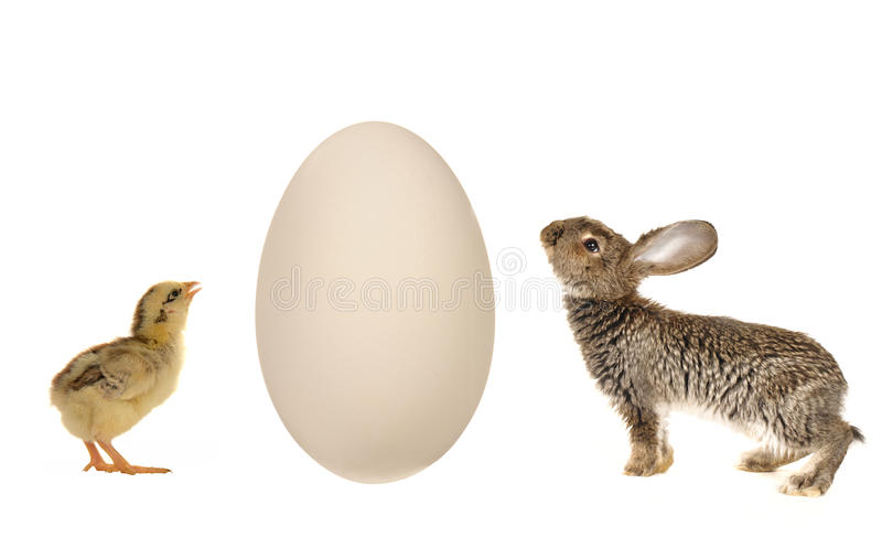 Download Egg Royalty Free Stock Images - Image: 14527989