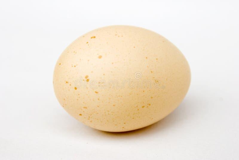 Egg Stock Photography