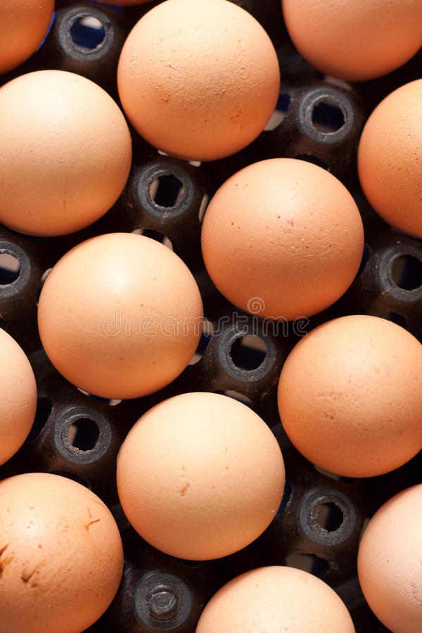 Free Egg Stock Images - 15749534