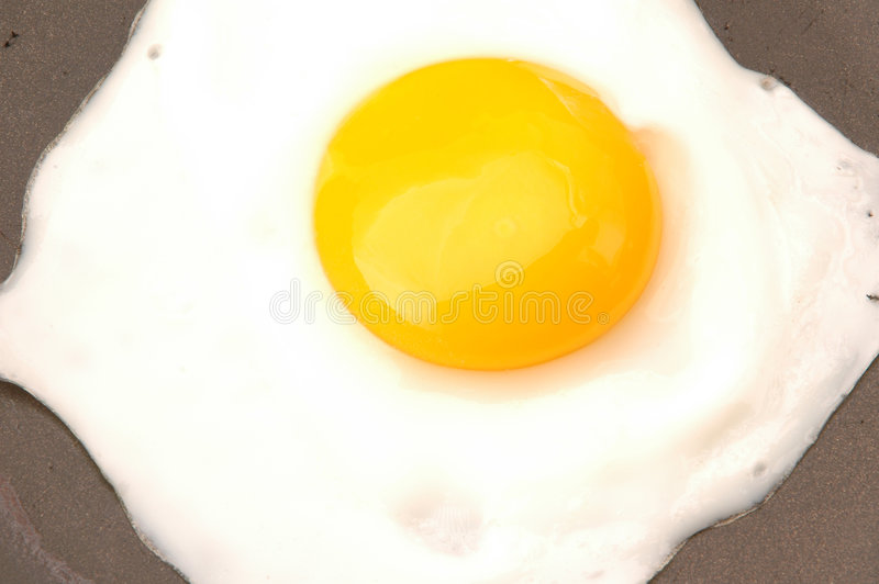 Egg 521 stock photography
