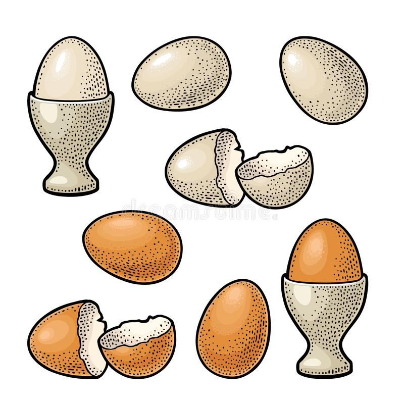 Egg and broken shell. Vintage color engraving illustration. Egg and broken shell. Vintage color and black vector engraving illustration for poster and label royalty free illustration
