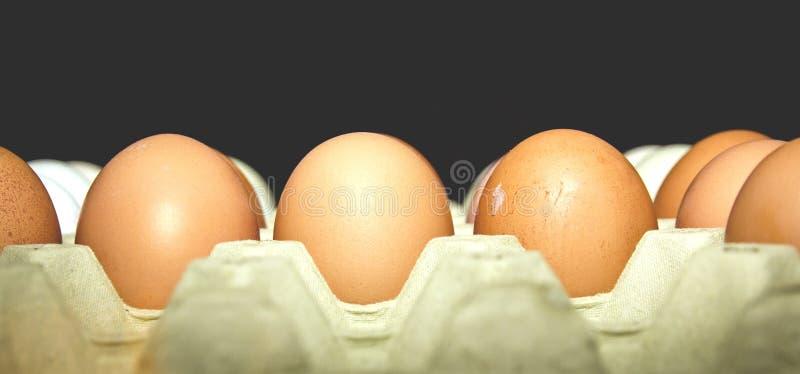 Egg carton stock image