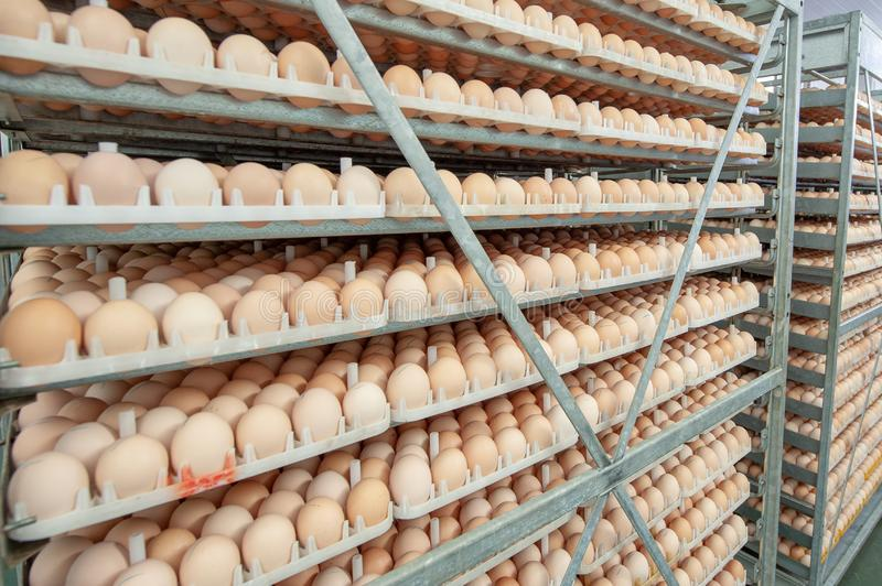 Egg Factory with GOOD Quality Control. Egg production line from breeders in Hatchery Unit modern Factory stock photography