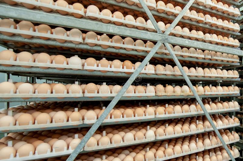 Egg Factory with GOOD Quality Control. Egg production line from breeders in Hatchery Unit modern Factory royalty free stock photos