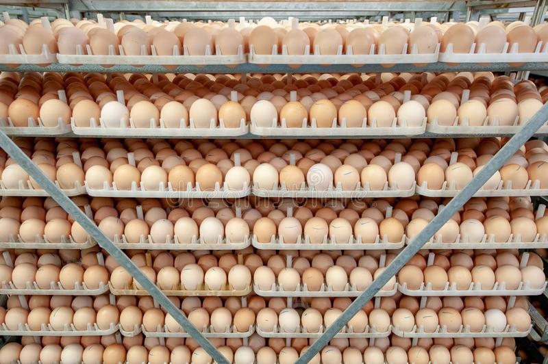 Egg Factory with GOOD Quality Control. Egg production line from breeders in Hatchery Unit modern Factory royalty free stock images