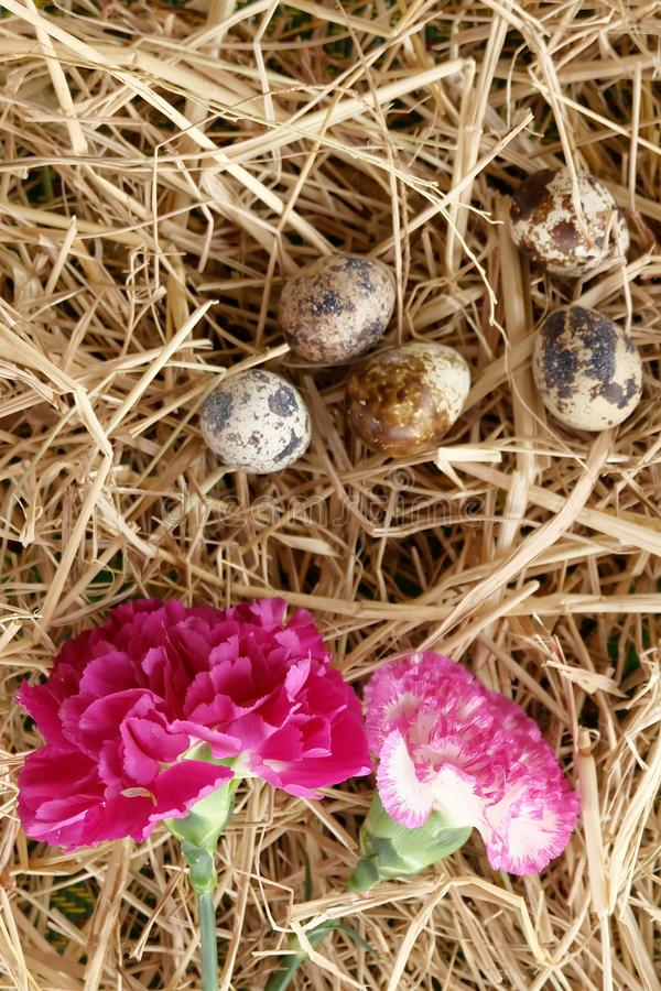 Egg floral flower easter thatch. Pink flower & egg on straw texture stock photos