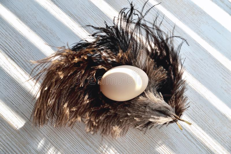 Egg lies on ostrich feathers, backlight, natural wood background stock images
