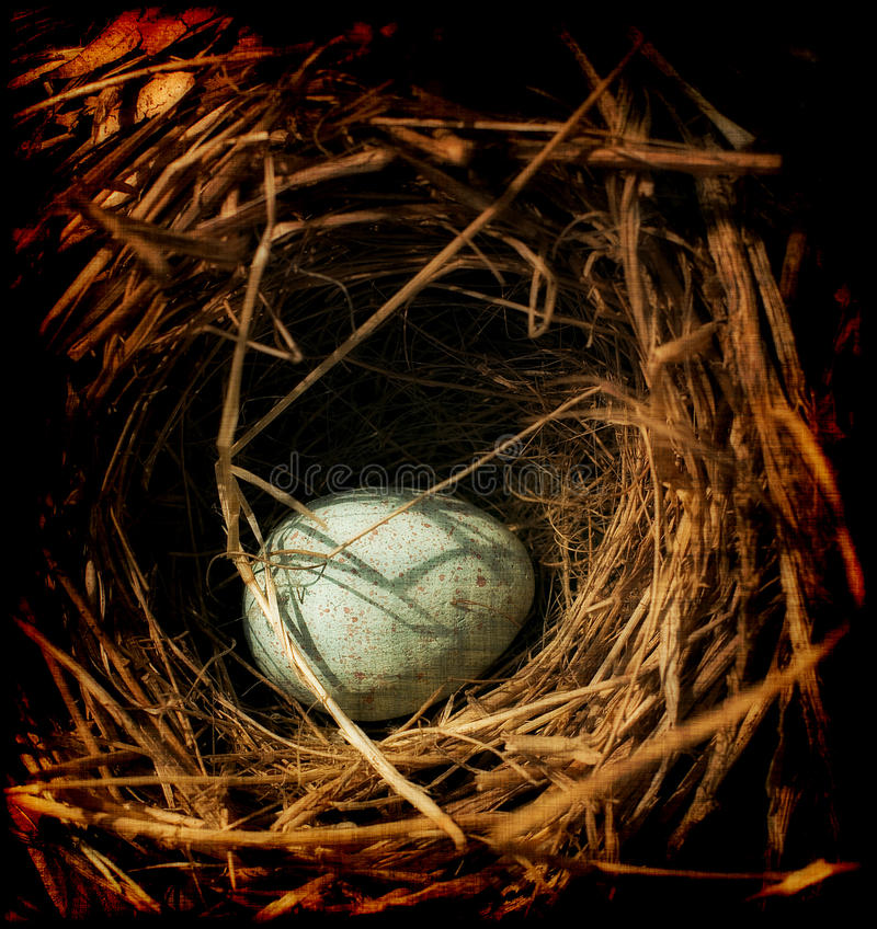 Download Egg in a nest stock image. Image of animal, speckled - 15576845