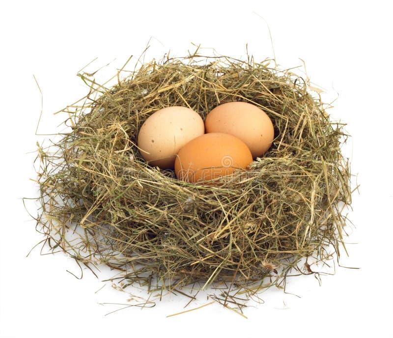 Egg in nest stock images