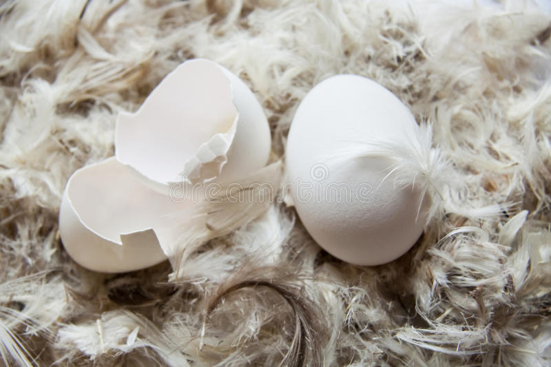 Download Egg in the nest stock photo. Image of down, cracked, farming - 22250004
