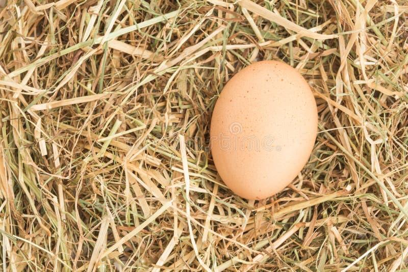 Egg nestled in straw