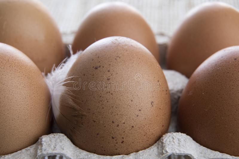 Egg. Ordinary Chicken Eggs royalty free stock photography