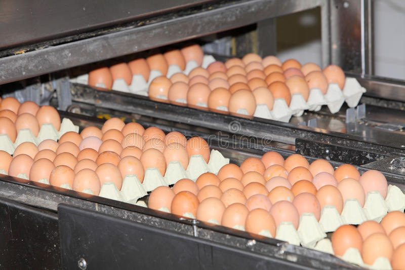 Download Egg packaging technology stock photo. Image of industry - 20987834