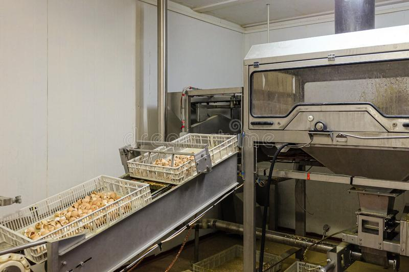 Egg shell grinding equipment and emptying boxes stock photo