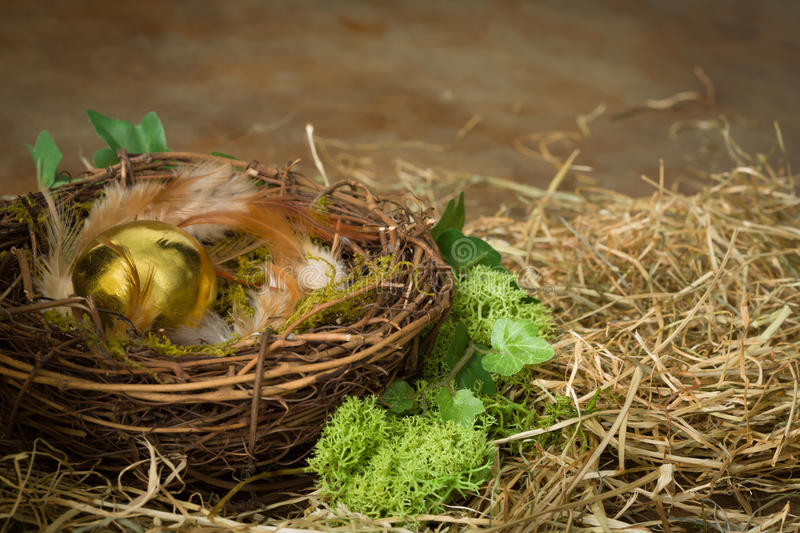 Egg treasure. Golden eggs in a bird's nest in moss royalty free stock photography