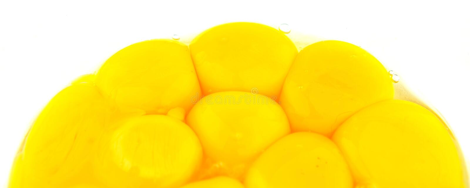 Egg Yolks Close Up View II stock image