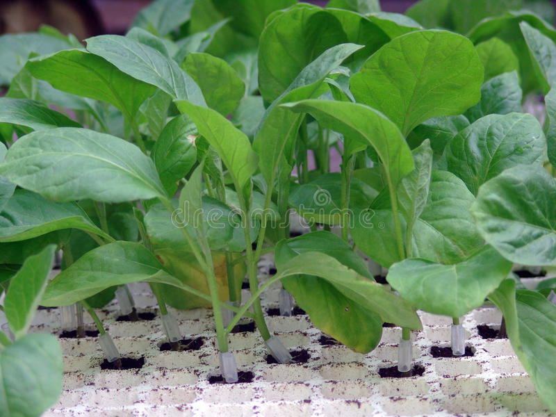 Download Egg Young Plants Stock Photo - Image: 27216750