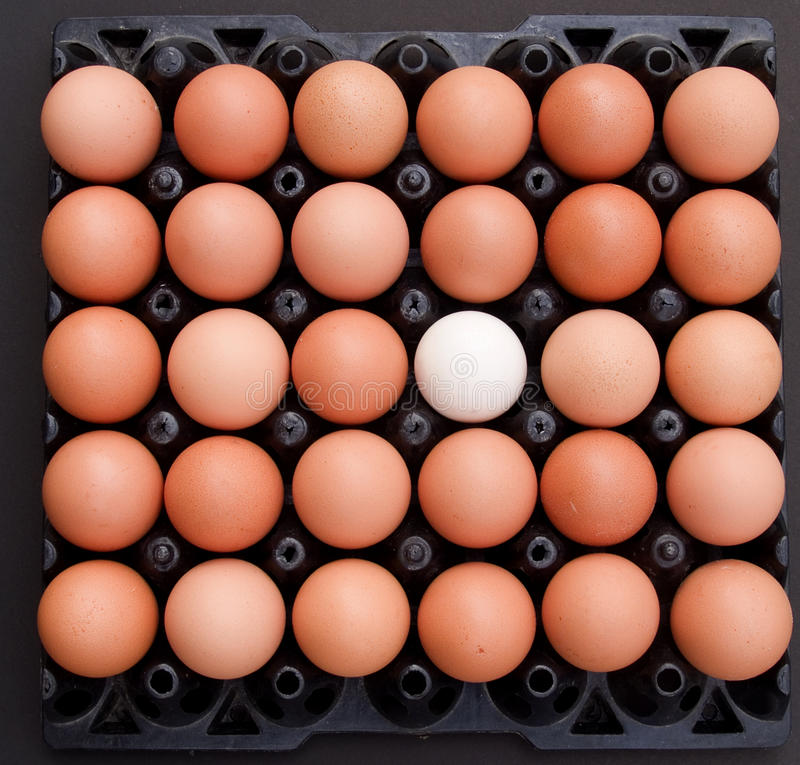 Download Egg2 stock photo. Image of sunrise, decor, object, cheerfulness - 16462694