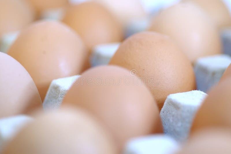 Egg4 imagenes de archivo