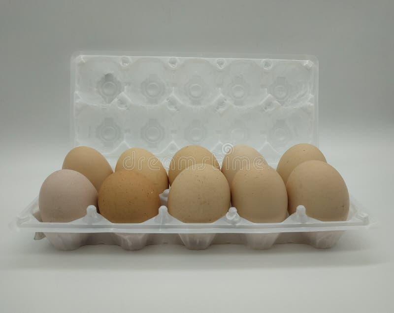 Egges de poulet photo stock