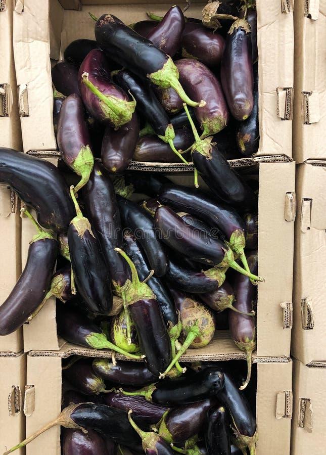 Eggplant in a box de papel no mercado fotografia de stock