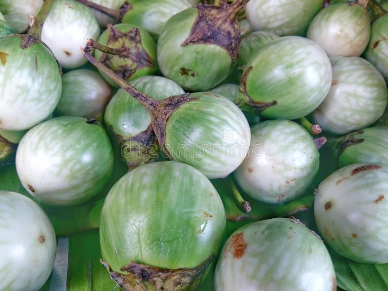 Eggplant is a circular green. With a close-up shot for cooking for a natural background stock image
