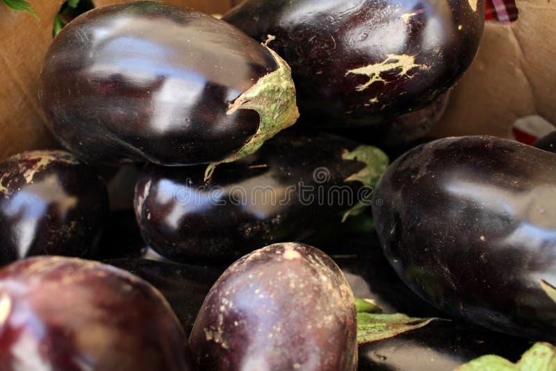Eggplant. Fresh organic aubergine. Vegetables pattern. Eggplant. Fresh organic aubergine. Vegetables pattern royalty free stock photography