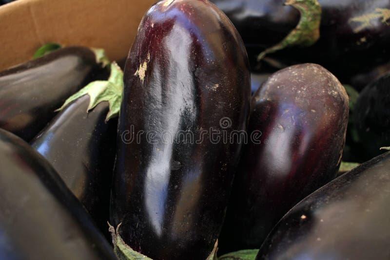 Eggplant. Fresh organic aubergine. Vegetables pattern. Eggplant. Fresh organic aubergine. Vegetables pattern stock photography