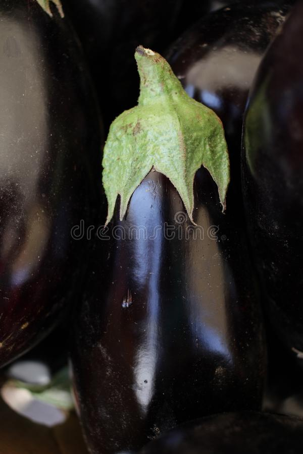 Eggplant. Fresh organic aubergine. Vegetables pattern. Eggplant. Fresh organic aubergine. Vegetables pattern stock photo