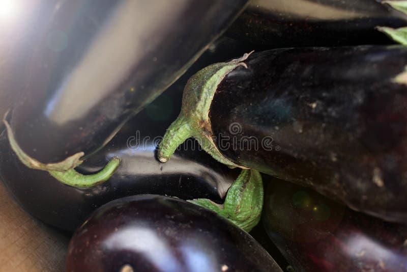 Eggplant. Fresh organic aubergine. Vegetables pattern. Eggplant. Fresh organic aubergine. Vegetables pattern royalty free stock images