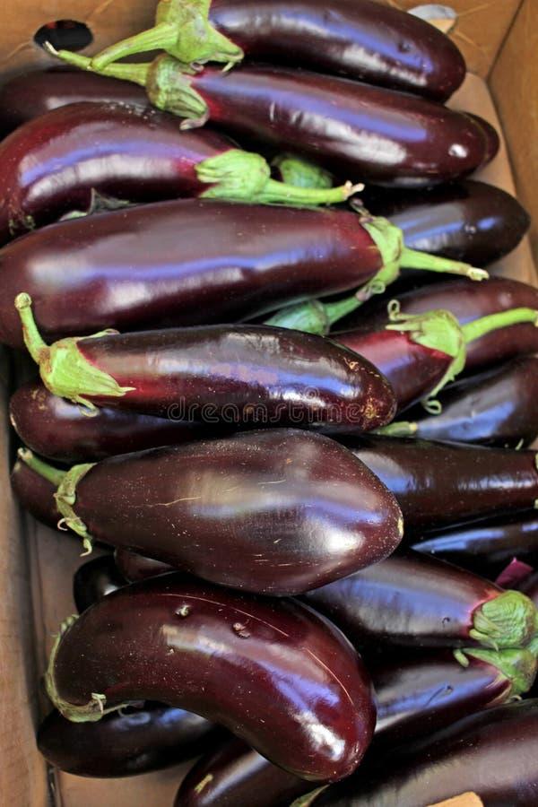 Eggplant. Fresh organic aubergine. Vegetables pattern. Vegetable background texture royalty free stock photography