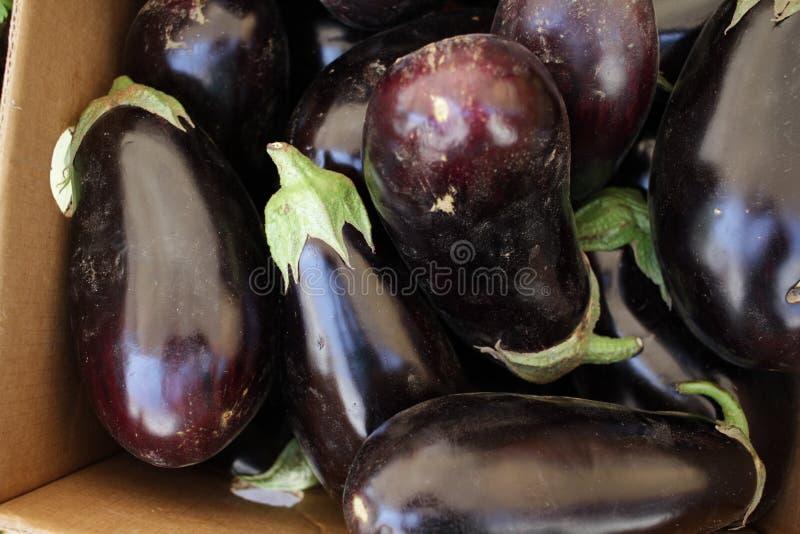 Eggplant. Fresh organic aubergine. Vegetables pattern. Full frame royalty free stock images