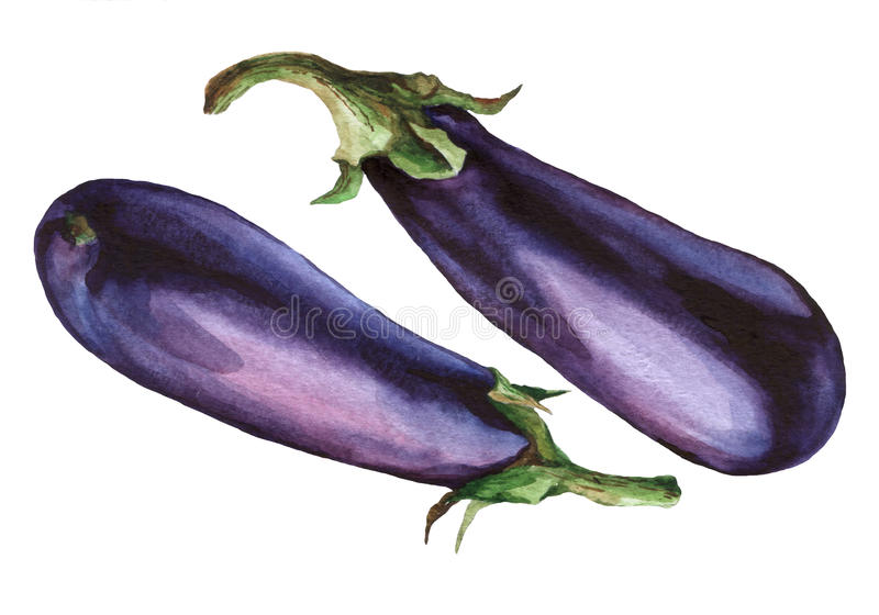 Eggplant. Hand drawn watercolor painting. On white background royalty free illustration