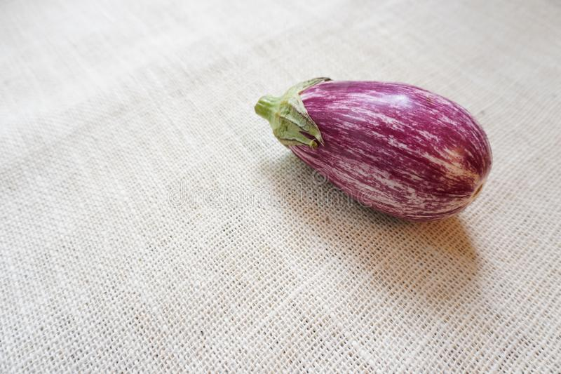 An eggplant harvested from the garden rests on a rustic burlap cloth royalty free stock photography