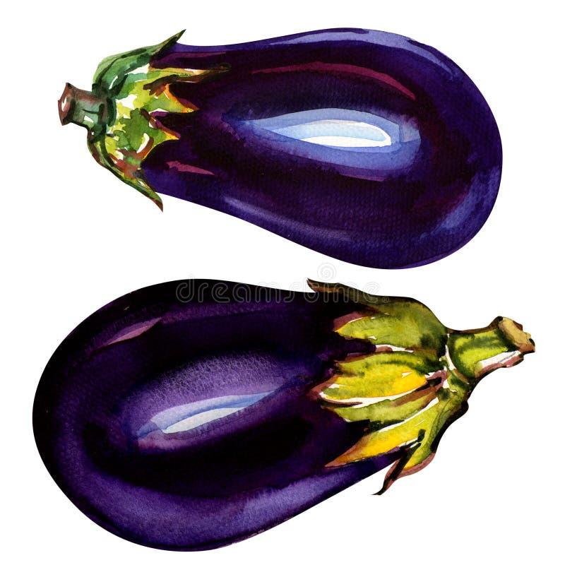 Eggplant isolated on white stock illustration